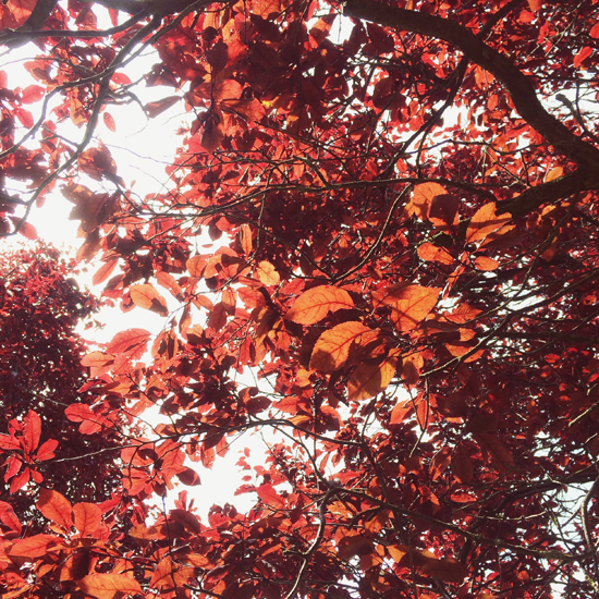 Red leaves | SusannahConway.com
